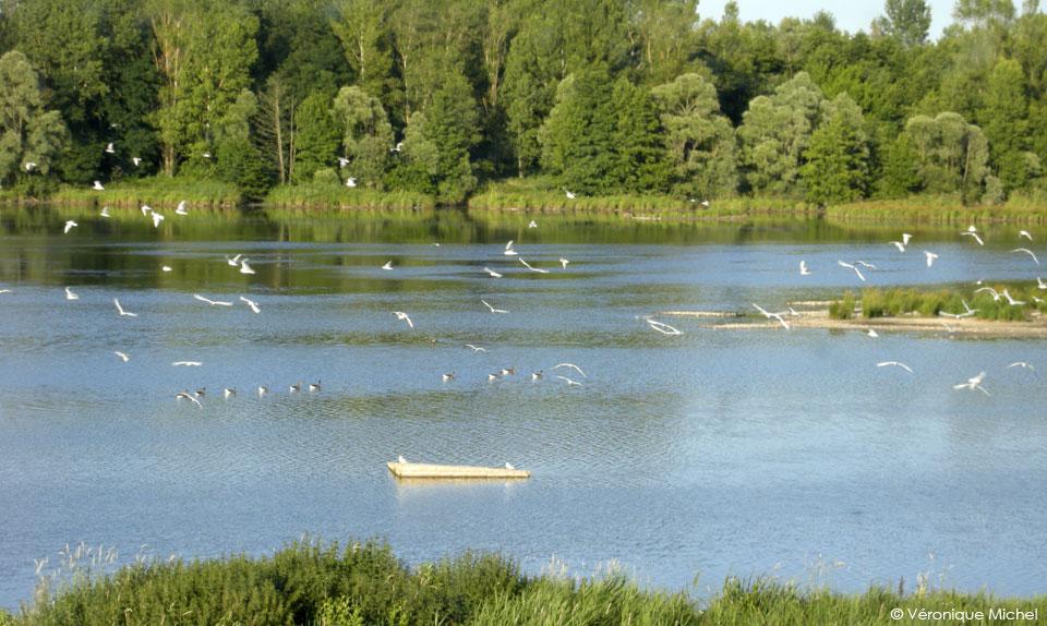 Oiseaux en migration à l'Ecopôle du Frez